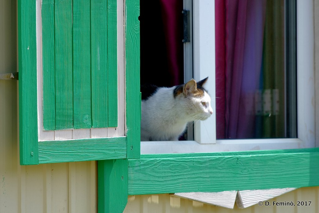 Ivolginsky Datsan, A cat at the window