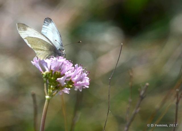 A butterfly (Blagaj, Bosnia, 2017)