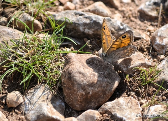 Butterfly under the sun (Hvar, Croatia, 2017)