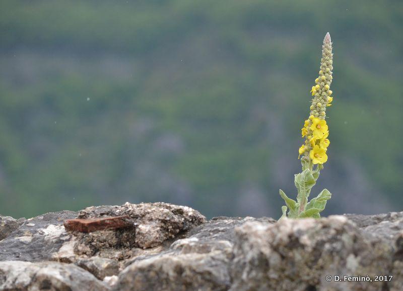 Nature (Kotor, Montenegro, 2017)