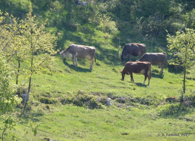 Pastures (Ostrog, Montenegro, 2017)