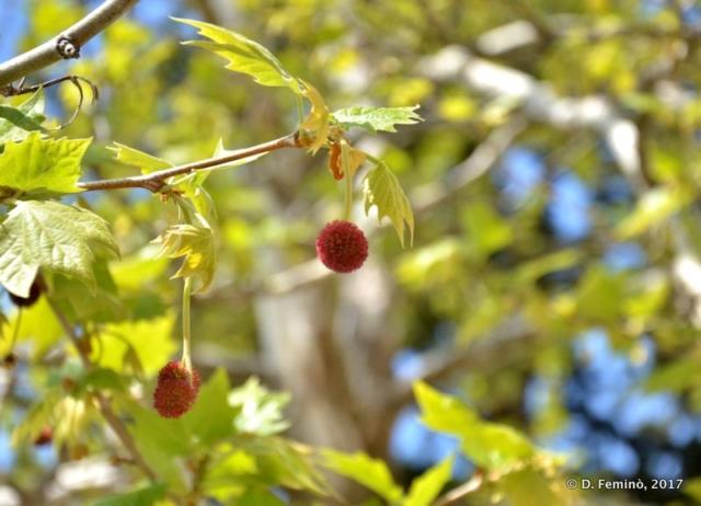 Spring berries (Ostrog, Montenegro, 2017)