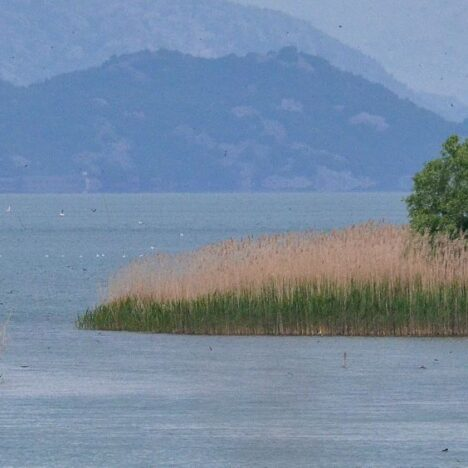 Shiroka and the lake Skadar