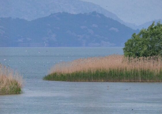 Landscape of lake Skadar