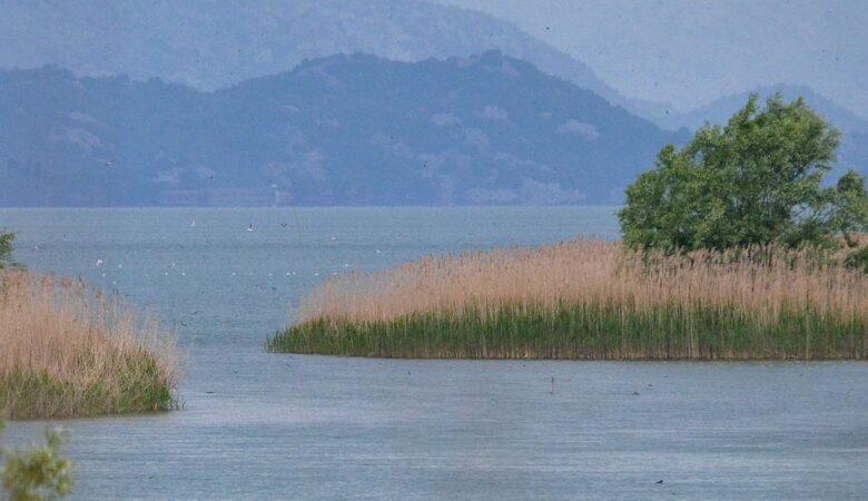 Landscape of lake Skadar