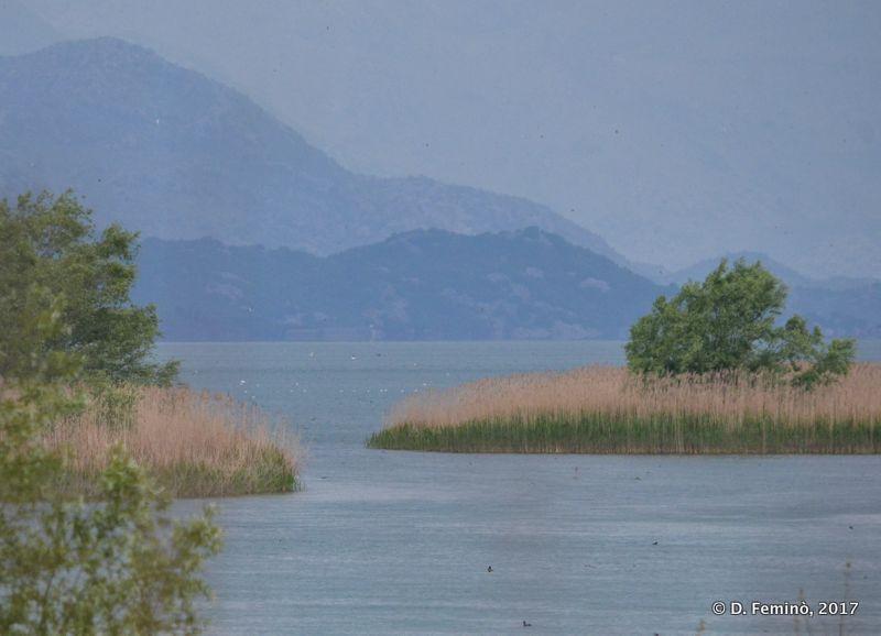Melancholic view (Lake Skadar, Albania, 2017)