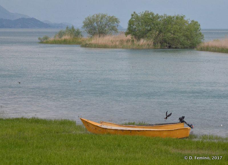 Moored boar (Lake Skadar, Albania, 2017)