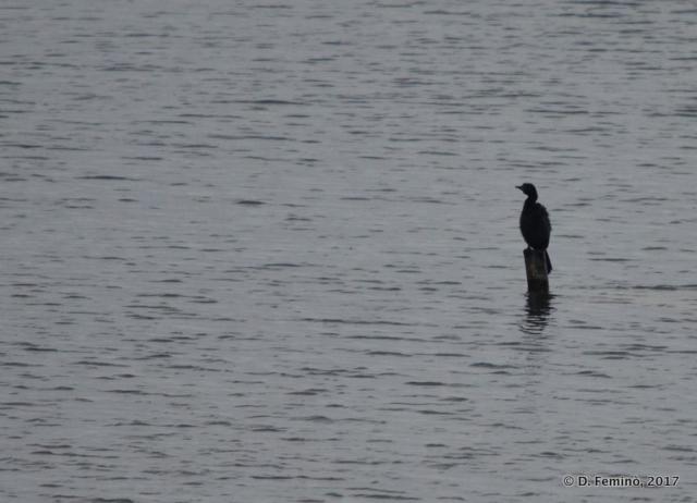 Loneliness (Lake Skadar, Albania, 2017)