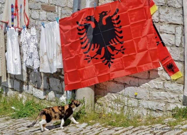 Cat honouring the flag (Berat, Albania, 2017)