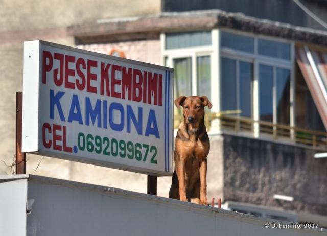 Sentinel (Berat, Albania, 2017)
