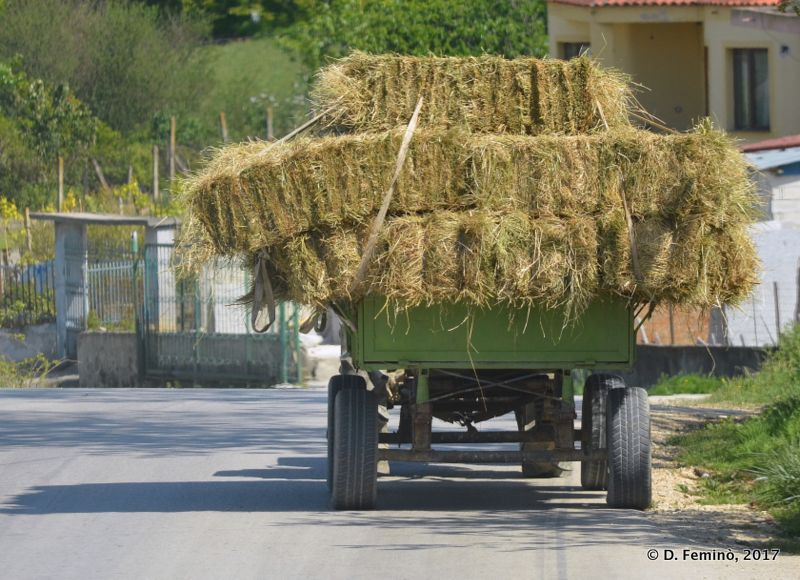 Transporting hay (Fier, Albania, 2017)