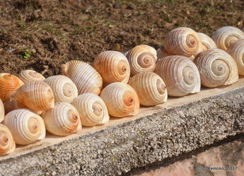 Seashells (Sarandë, Albania, 2017)
