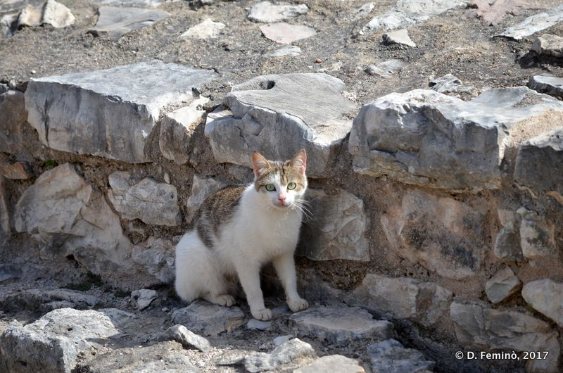 A cat among the ruins (Sarandë, Albania, 2017)