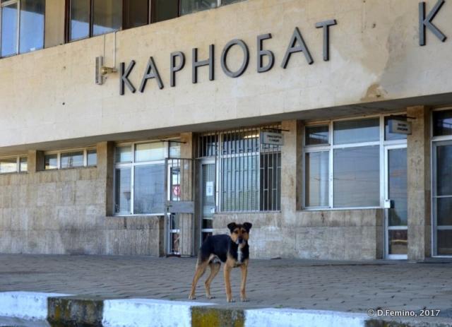 Boss of the station (Karnobat, Bulgaria, 2017)