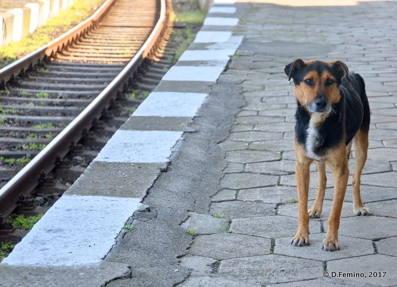 Guarding the railways (Karnobat, Bulgaria, 2017)
