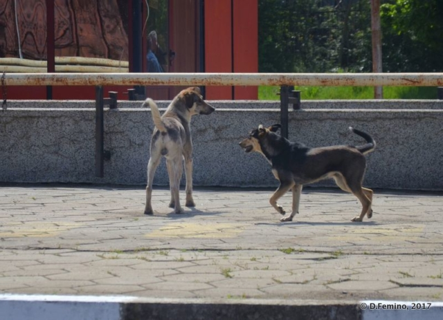More than friends (Karnobat, Bulgaria, 2017)