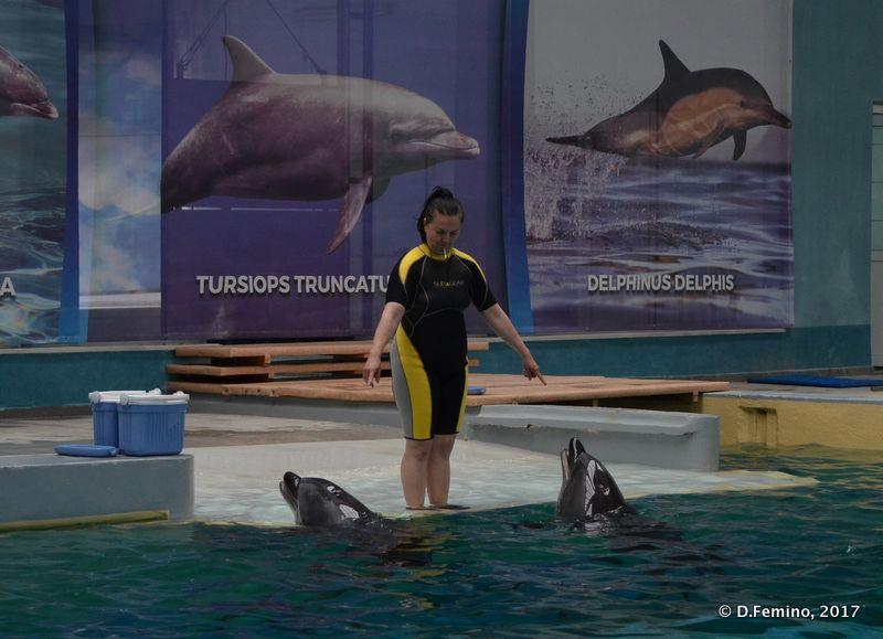 Synced food (Dolphinarium, Constanța, Romania, 2017)