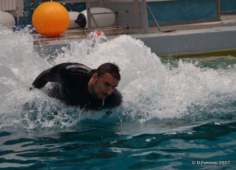 Surfing on a dolphin (Dolphinarium, Constanța, Romania, 2017)