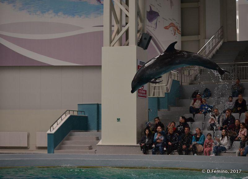 Artistic jump (Dolphinarium, Constanța, Romania, 2017)
