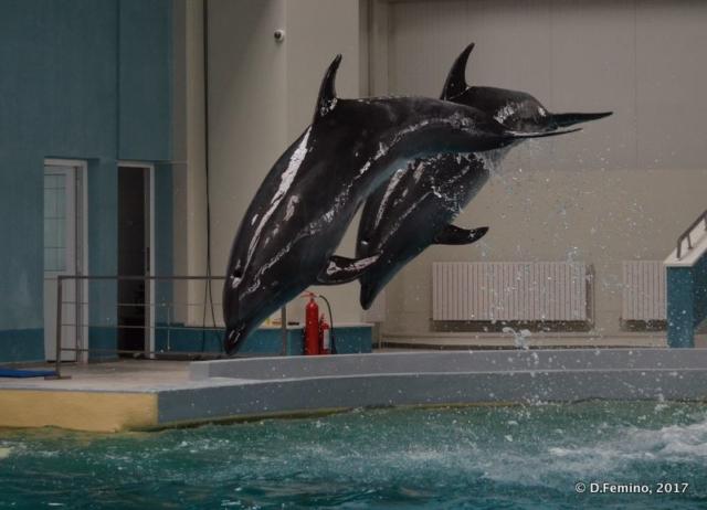 Double jump (Dolphinarium, Constanța, Romania, 2017)