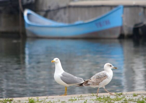 Seagulls in the harbour