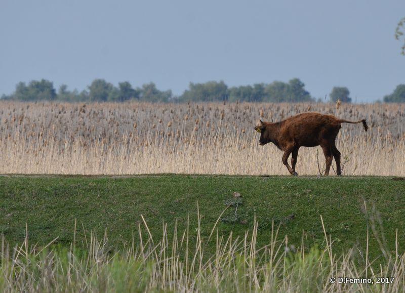 Landscape (Danube Delta, Romania, 2017)