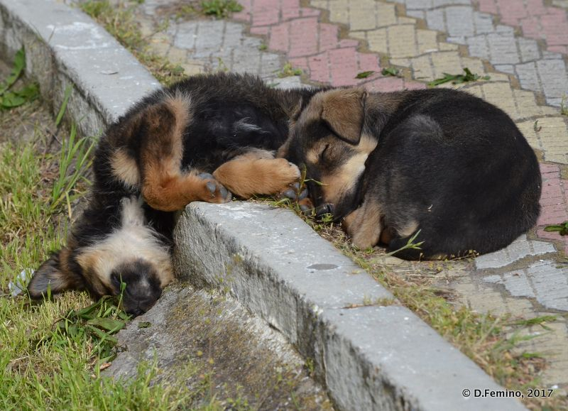 Unconfortably sleeping (Sulina, Romania, 2017)