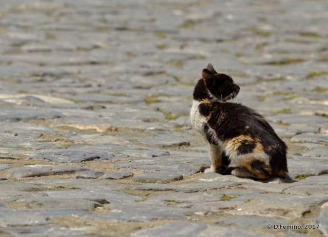 Cat on cobbled street (Nesebar, Bulgaria, 2017)
