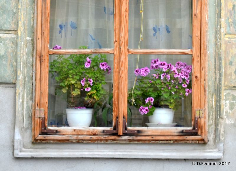 Flowered window (Brașov, Romania, 2017)