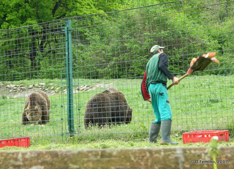 Feeding the bears (Bear Sanctuary, Romania, 2017)