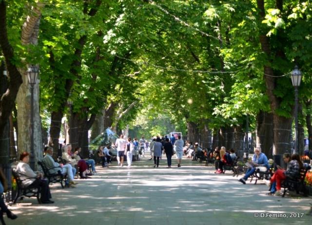 Trees on Primorska Street (Odessa, Ukraine, 2017)