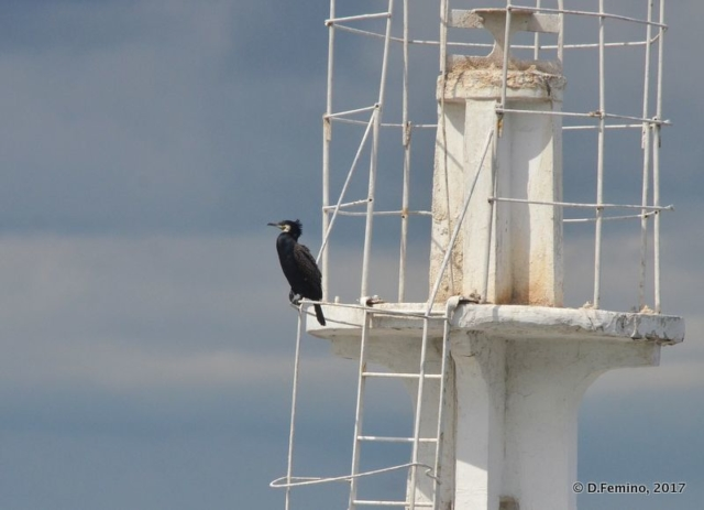 A lonely cormorant (Odessa, Ukraine, 2017)