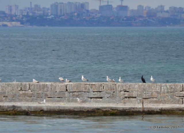 Birds on the dock (Odessa, Ukraine, 2017)