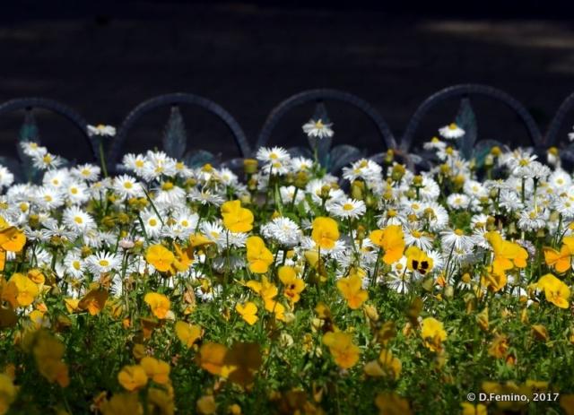 Flowerbed (Odessa, Ukraine, 2017)