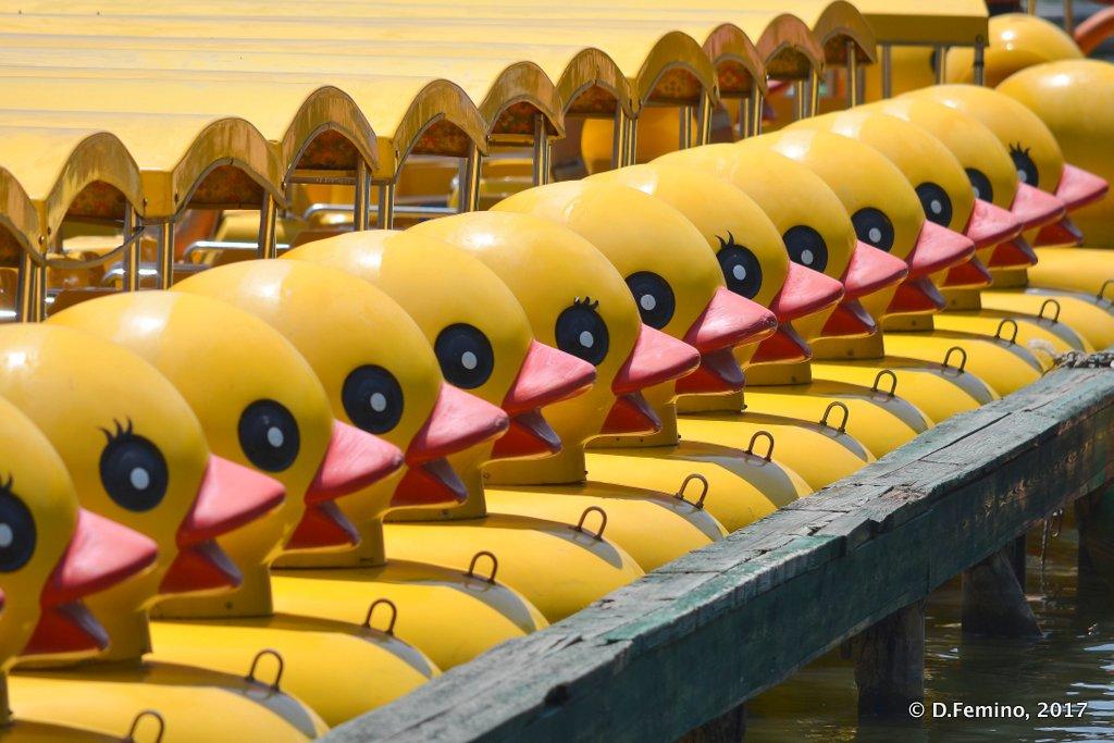 A ducks army