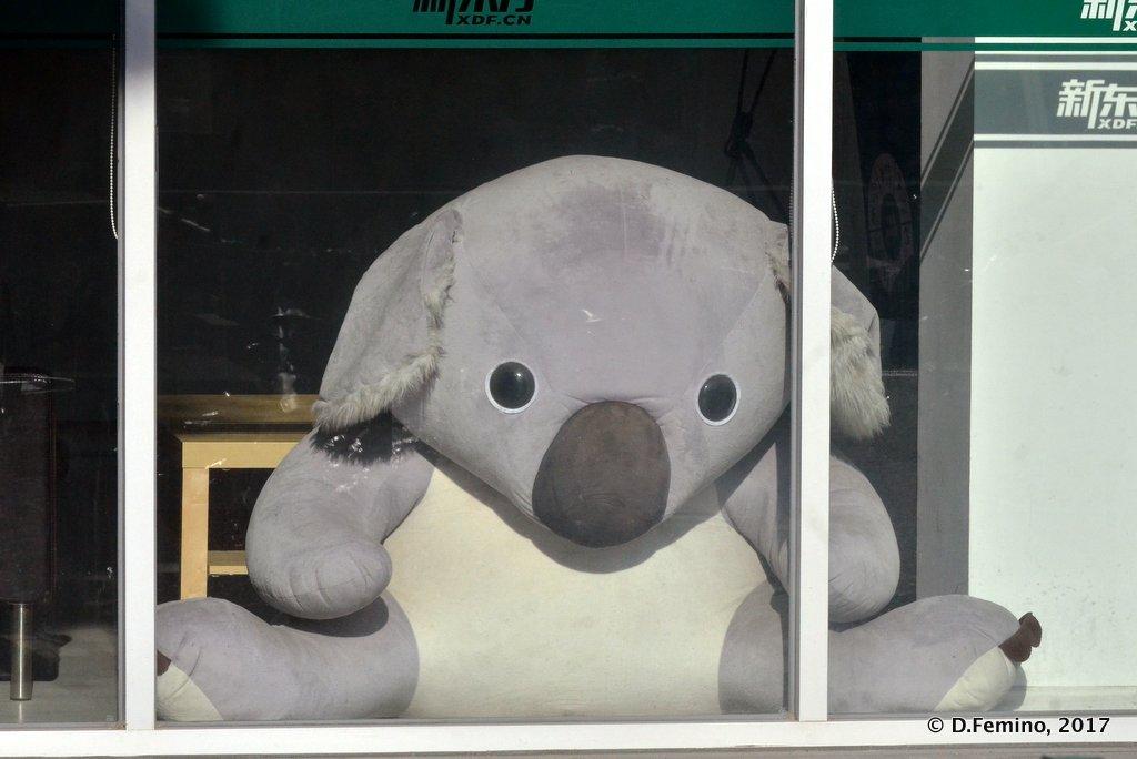 Big teddy bear in a window