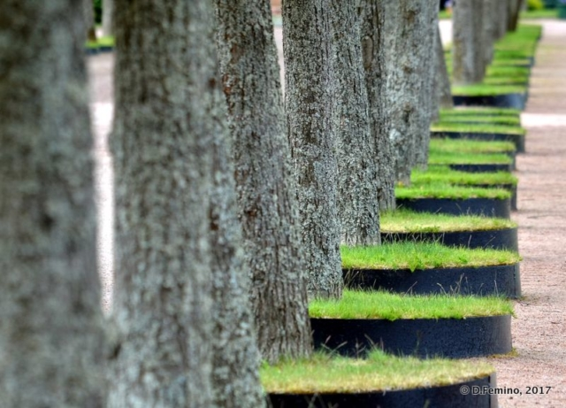 Tree perspective (Peterhof, Russia, 2017)