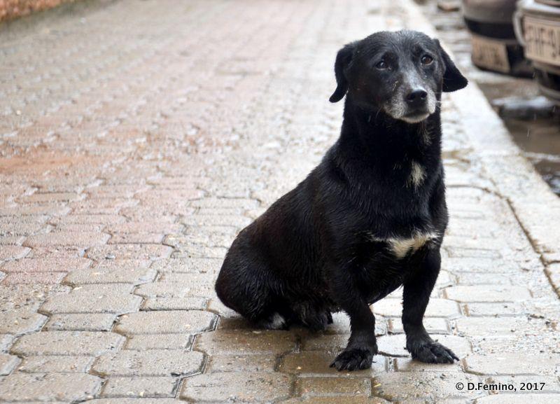 Dog in the most perfect pose (Kutaisi, Georgia, 2013)