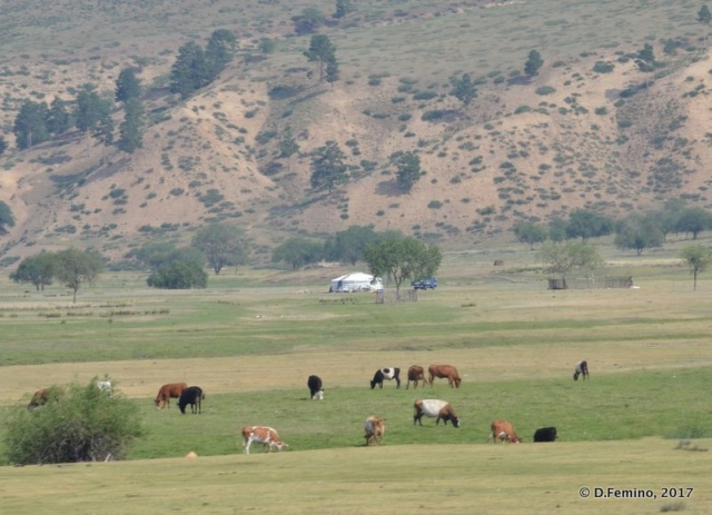 Landscape with cattle (Mongolia, 2017)