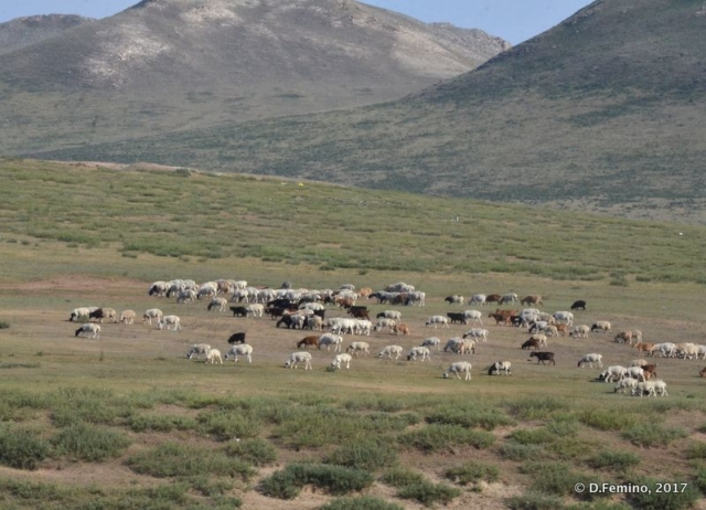 Hills and cattle (Mongolia, 2017)