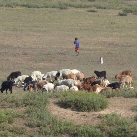 Long long way to Ulaanbaatar