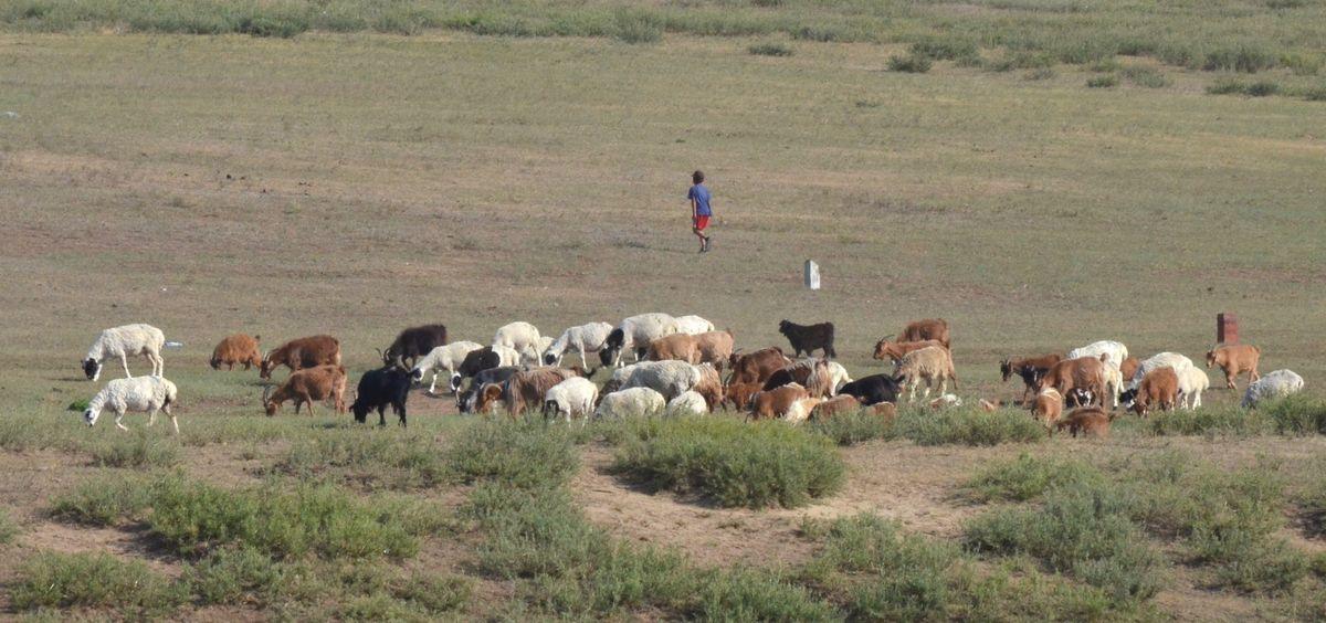 Bus trip to Mongolia photos