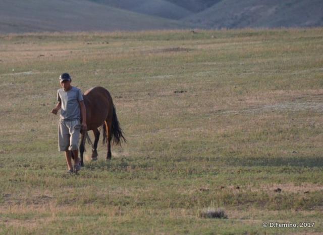 Man and horse (Mongolia, 2017)
