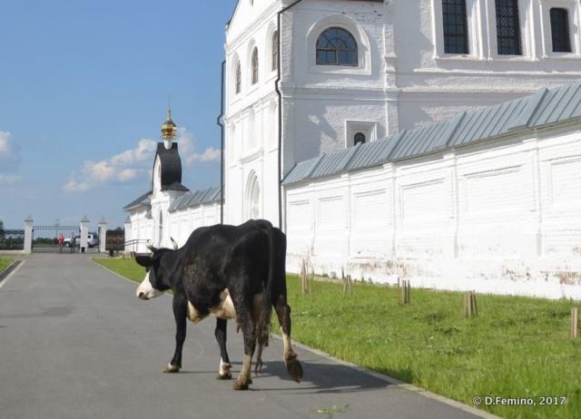 A cow by the Znamensky Monastery (Abalak, Russia, 2017)
