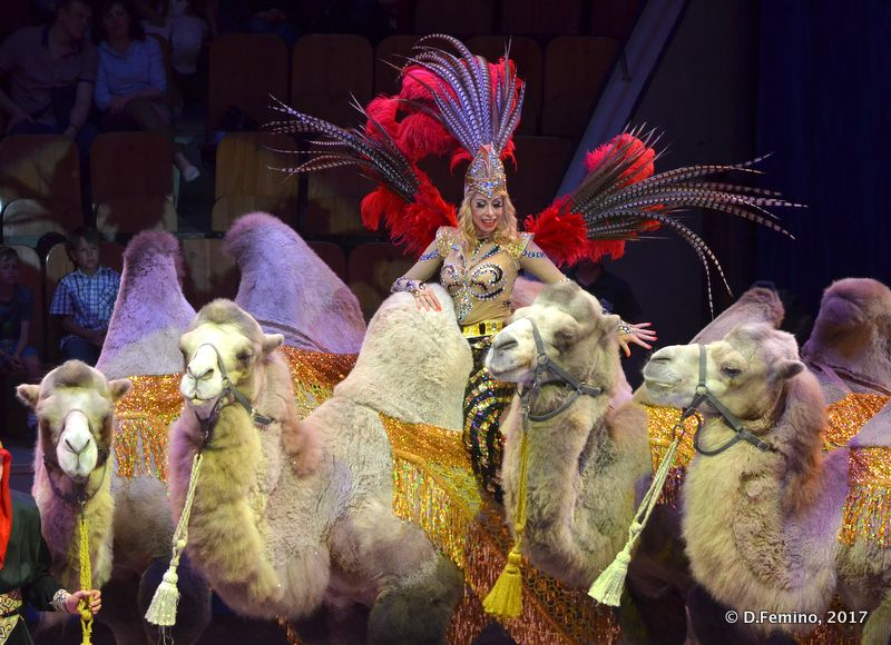 Lady of the camels (Tyumen, Russia, 2017)