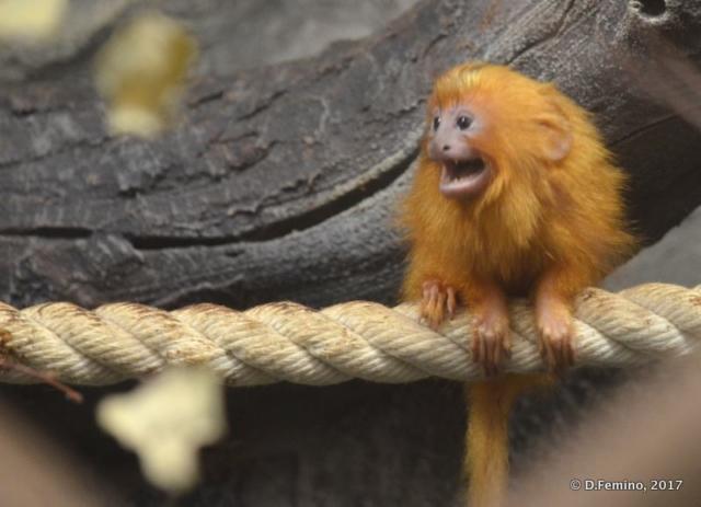 Aargh! (Novosibirsk Zoo, Russia, 2017)