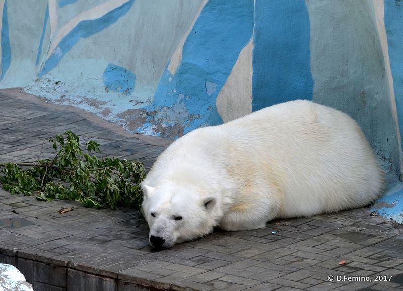 Sleeping bear (Novosibirsk Zoo, Russia, 2017)