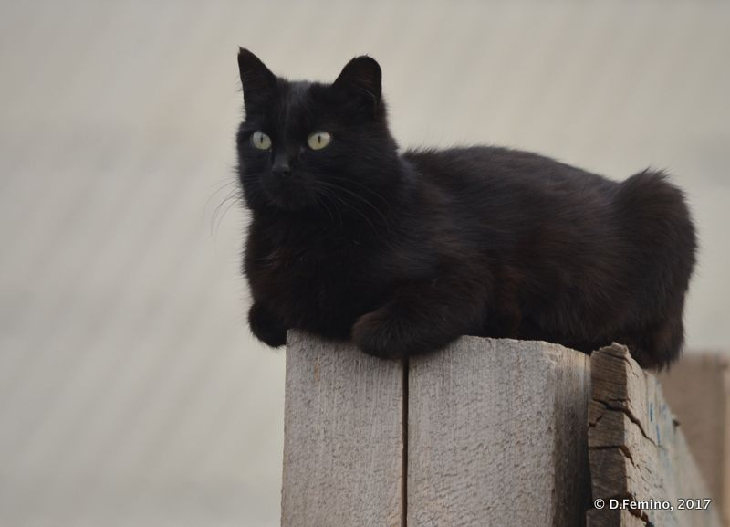 Resting cat (Khuzhir, Russia, 2017)