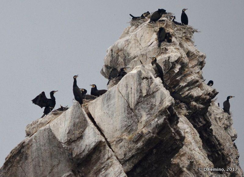 Cormorants on the rocks (Izhilkhey islet, Russia, 2017)