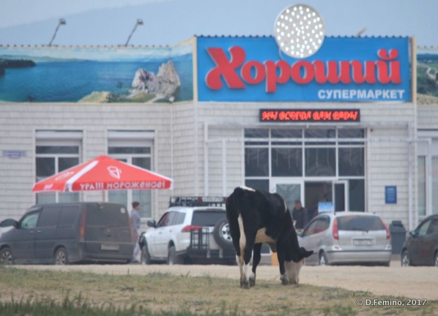 Cow by the supermarket (Khuzhir, Russia, 2017)